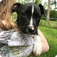 Adopt A Pet :: Kylie - Thompson, PA
