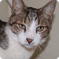 Adopt A Pet :: Button - Georgetown, TX