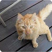 Adopt A Pet :: Daisy - Warren, MI