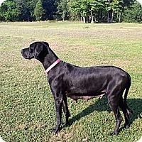 Adopt A Pet :: Dutchess - Marion, IL
