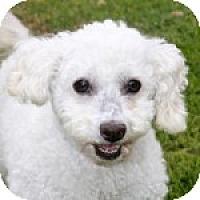 Adopt A Pet :: Mickey - La Costa, CA