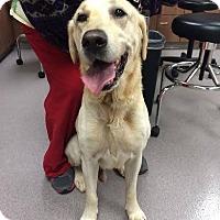 Adopt A Pet :: Swartz - Cumming, GA