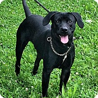 Adopt A Pet :: Buster - Springfield, IL