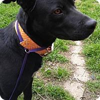 Adopt A Pet :: Marshall Dillon - Jarrell, TX
