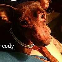 Miniature Pinscher Dog for adoption in Columbus, Ohio - Cody