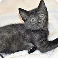 Adopt A Pet :: Scion (super sweet) - New Smyrna Beach, FL