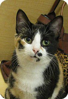 Calico Cat for adoption in Tulsa, Oklahoma - Jimilee