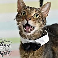Adopt A Pet :: Jiggs - Wayne, PA