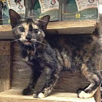 Adopt A Pet :: Angel - Del Rio, TX