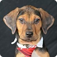 Adopt A Pet :: Mario Andretti - Plano, TX