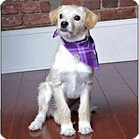 Adopt A Pet :: Mistletoe (Missy) - Owensboro, KY