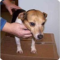 Adopt A Pet :: Jersey - Carmel, IN