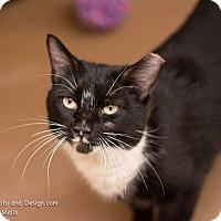Adopt A Pet :: Summer - Fountain Hills, AZ