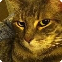 Adopt A Pet :: BLUEBERRY - Chandler, AZ