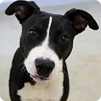 Adopt A Pet :: Dempsey - Groton, MA