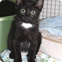 Adopt A Pet :: Deva - Trevose, PA