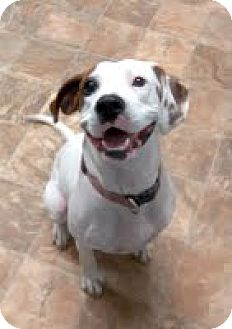 Hound (Unknown Type) Mix Dog for adoption in Darlington, South Carolina - Sally