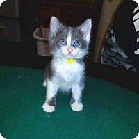 Adopt A Pet :: Fate - Putnam, CT