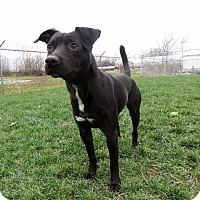 Adopt A Pet :: Blackfoot - Van Wert, OH