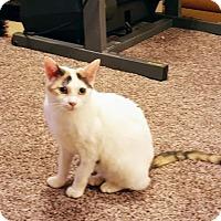 Adopt A Pet :: Vegas - Rochester, MN