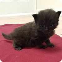 Adopt A Pet :: Berlioz $125 - Seneca, SC