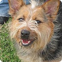 Adopt A Pet :: Winn Dixie - Kittery, ME