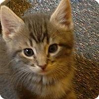 Adopt A Pet :: Bottle Fed Girl Babies - Richfield, OH