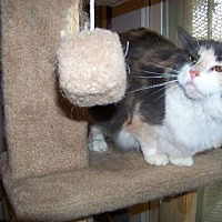 Adopt A Pet :: Amanda - Glendale, AZ