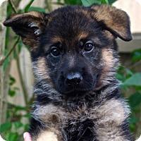Adopt A Pet :: Musubi*Adoption Pending* - Mill Creek, WA