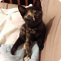 Adopt A Pet :: Sloane Peterson - St. Louis, MO