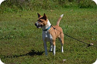 Collie Mix Dog for adoption in Lebanon, Missouri - Stella