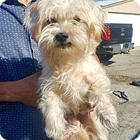 Adopt A Pet :: Teddy - North Bend, WA
