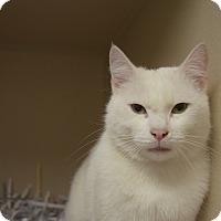 Adopt A Pet :: Murphy - Pottsville, PA