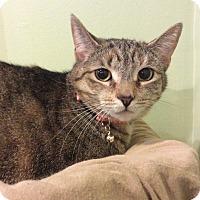 Adopt A Pet :: Jade - Breinigsville, PA