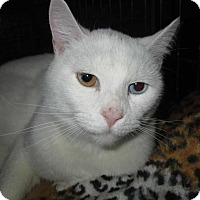 Adopt A Pet :: Jack Frost - Norwich, NY