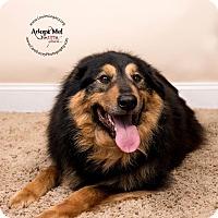 Adopt A Pet :: Casey - Cincinnati, OH
