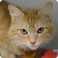 Adopt A Pet :: Cayenne162081 - Atlanta, GA