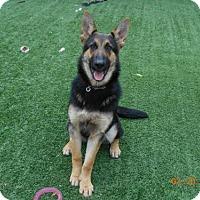 Adopt A Pet :: Mika - San Jose, CA