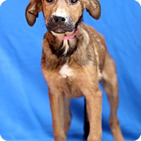 Adopt A Pet :: Draven - Waldorf, MD