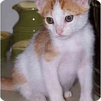 Adopt A Pet :: Little Guy - Richmond, VA