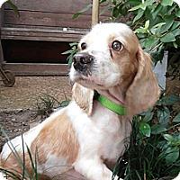 Adopt A Pet :: Roni Michelle - Sugarland, TX