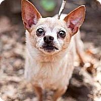 Adopt A Pet :: Pringle - Sherman Oaks, CA