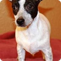 Adopt A Pet :: Keilani - Gilbert, AZ