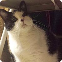 Adopt A Pet :: Bettie - Colmar, PA