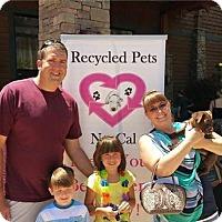 Adopt A Pet :: Benny - Sacramento, CA