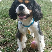 Adopt A Pet :: Fleur - Fullerton, CA