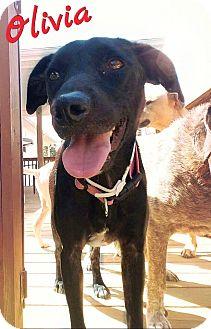 Labrador Retriever Mix Dog for adoption in Columbia, Tennessee - Olivia aka 'Liv'