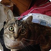 Adopt A Pet :: Rhianna - Orinda, CA
