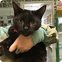 Adopt A Pet :: Sutter - Westminster, CA