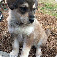 Adopt A Pet :: Daphne - Greensboro, GA